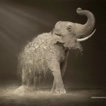 Disappearing elephant